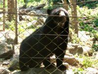 Senda Verde, proyecto de protección a vida silvestre
